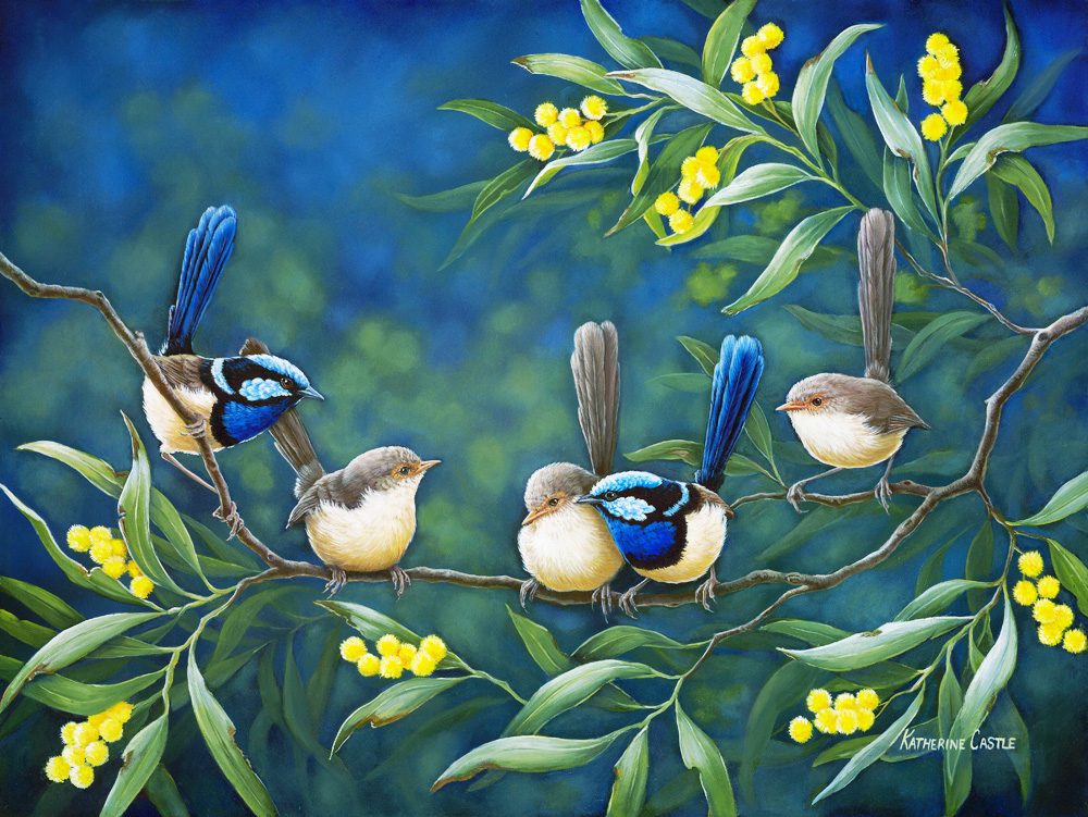 centre-of-attention-fairy-wrens2