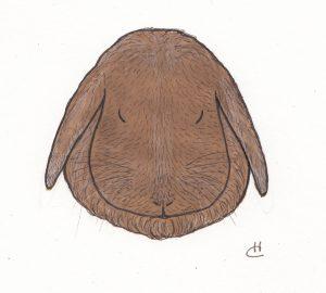 lop-bunny