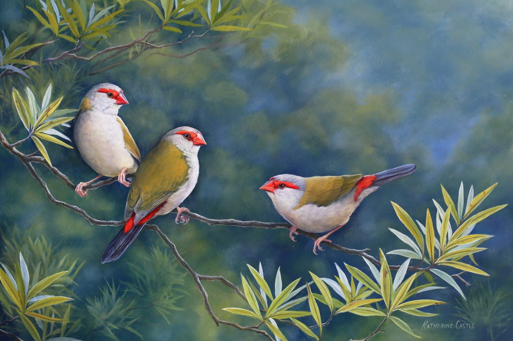 the-visitor-red-browed-finches-katherine-castle2-1